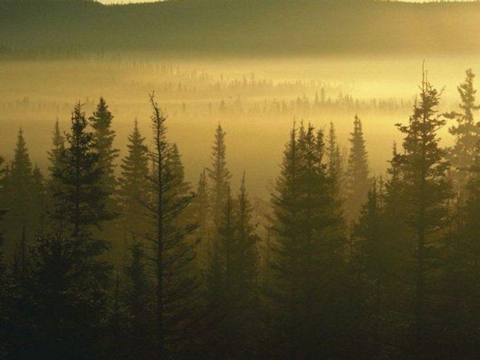 Bosque_Europa